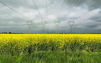 Power lines over field of flowers - p429m663886 by Mischa Keijser