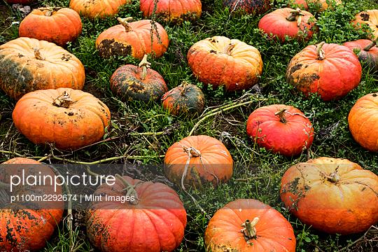 10/19/2020 - p1100m2292674 by Mint Images