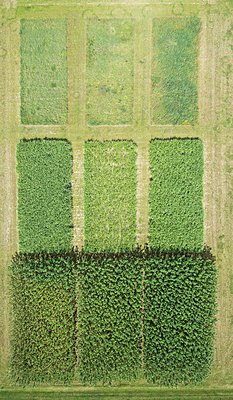 Full frame aerial view of crops in agricultural landscape, Stuttgart, Baden-Wuerttemberg, Germany - p301m1406301 by Stephan Zirwes