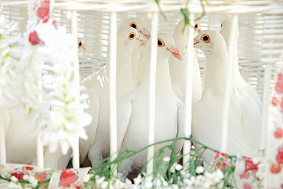 Wedding Dove Cage - p669m883901 by Jutta Klee photography