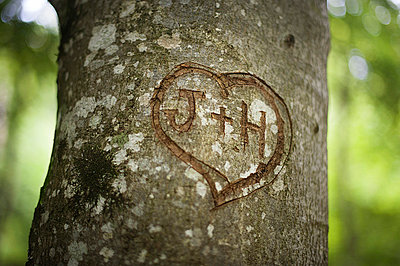 Engraved heart on a tree - p1007m853049 by Tilby Vattard