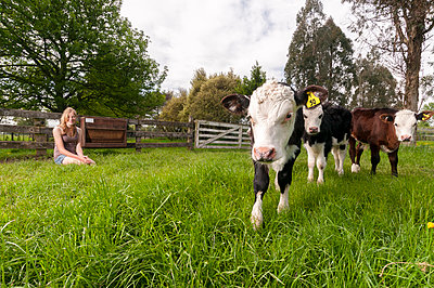 Girl feeding calfs - p1201m1040609 by Paul Abbitt