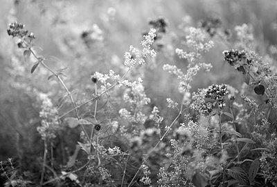Meadow with wild flowers - p308m2124867 by Ellen Bornkessel