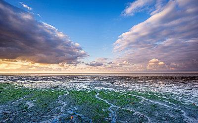 Coast at low tide, Wadden Sea, Moddergat, Netherlands - p884m1509991 by Ron ter Burg/ Buiten-beeld