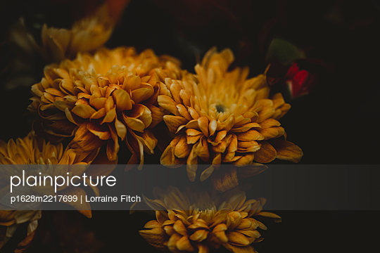 Yellow flowers  - p1628m2217699 by Lorraine Fitch