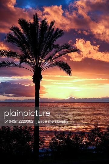 Palme an der Küste bei Sonnenuntergang, Madeira - p1643m2229382 von janice mersiovsky