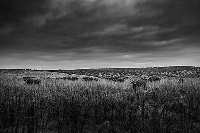 Gorah South Africa Elephant Camp  - p1171m1143946 by SimonPuschmann