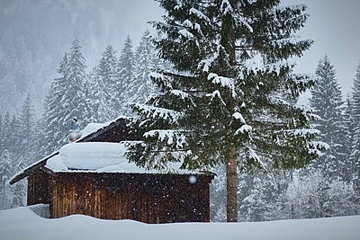 Snow-capped mountain shelter - p851m1573522 by Lohfink