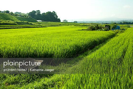 Reisfeld, nahe Kyoto, Region Kansai, Japan - p1316m1160947 von Katharina Jaeger