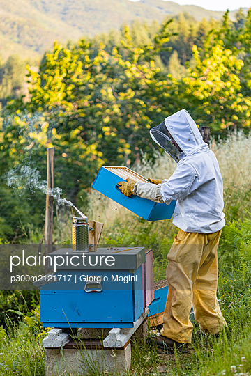 Beekeeper with honeycombs and smoker - p300m2121717 by Giorgio Magini