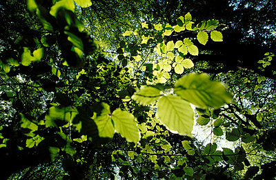 Grüne Blätter - p2200022 von Kai Jabs