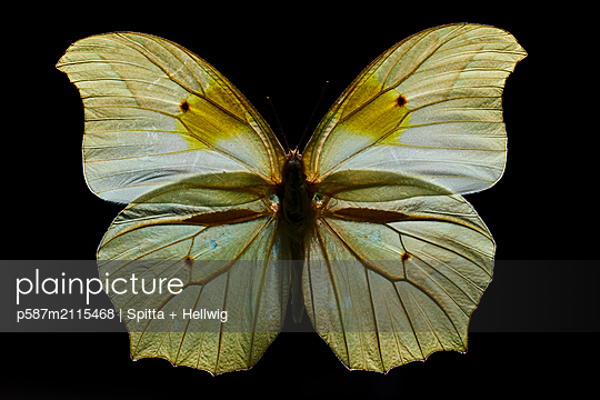 Butterfly in pastel colours - p587m2115468 by Spitta + Hellwig