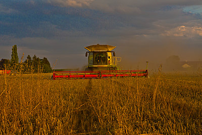 Combine harvester at work at sunset - p1484m2289435 by Céline Nieszawer
