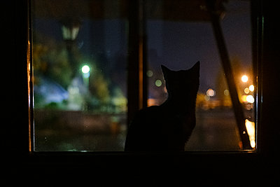 Cat at the window at night, Sarajevo - p1600m2184167 by Ole Spata