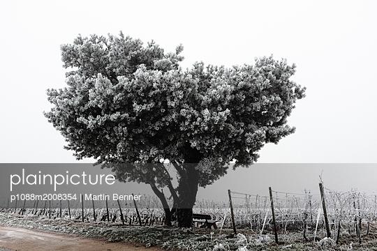 Baum im Weinberg - p1088m2008354 von Martin Benner