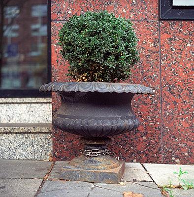 Buchsbaum - p154m668885 von Nele Heitmeyer