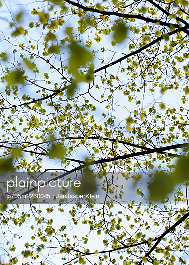 Tree during spring time - p795m2230045 by JanJasperKlein