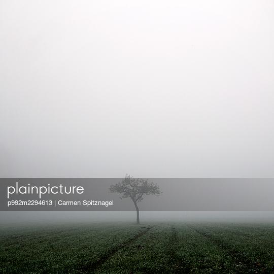 p992m2294613 by Carmen Spitznagel