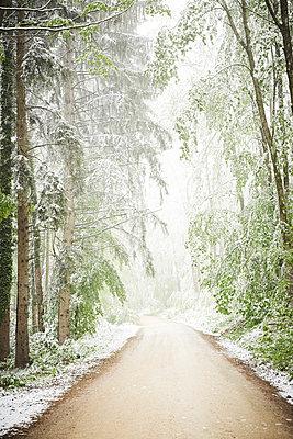 Frühlingswald mit Schnee - p1312m2089655 von Axel Killian
