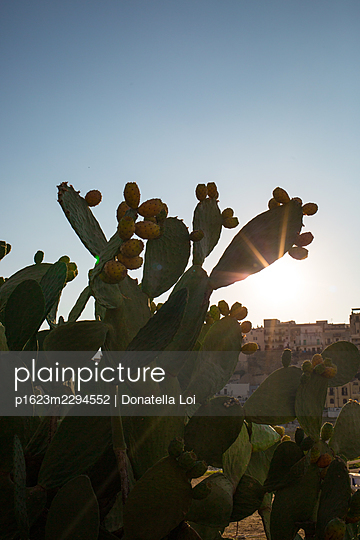 Sicilian cactus - p1623m2294552 by Donatella Loi