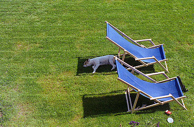 Sleeping dog in the garden - p0090191 by Erwin
