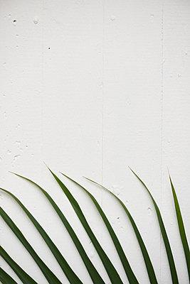 Betonpflanze - p1164m1195257 von Uwe Schinkel