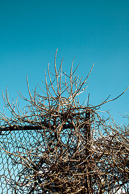 Vine branches tangled up in fence - p1248m2289359 by miguel sobreira
