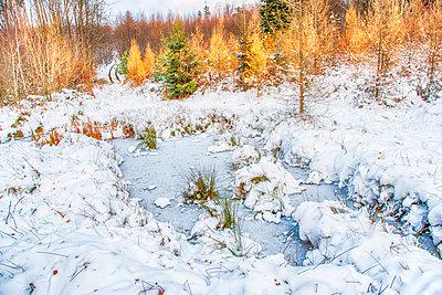 Wald - p1205m2054393 von Toni Anzenberger