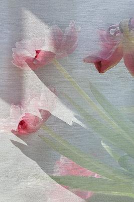 Tulpen - p1294m2184602 von Sabine Bungert
