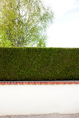 Hedge - p248m908358 by BY