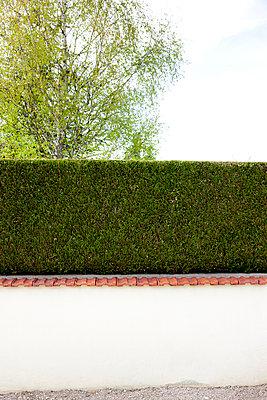 Thujaecke über Gartenmauer - p248m908358 von BY