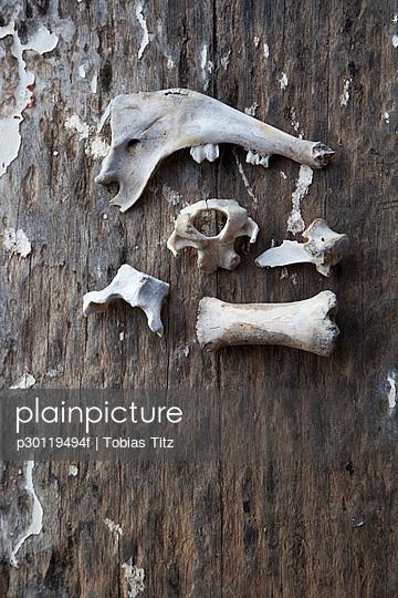 An arrangement of animal bones on a wood surface