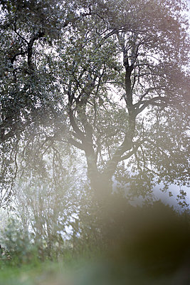 Tree through tall grass - p1682m2260706 by Régine Heintz