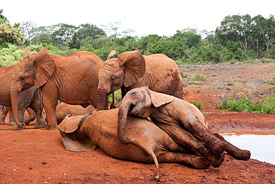 Nairobi Nationalpark - p5330336 von Böhm Monika