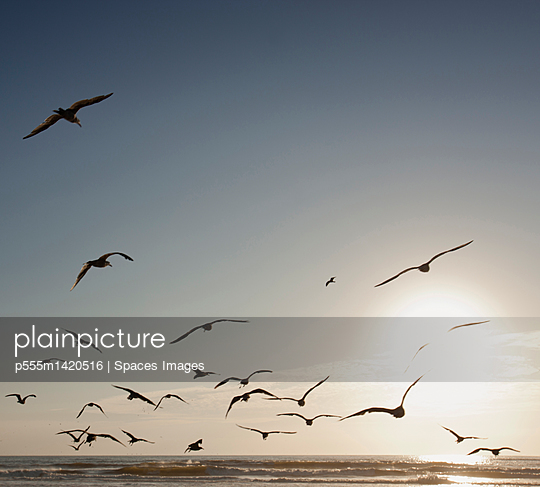 Flock of seagulls flying over beach