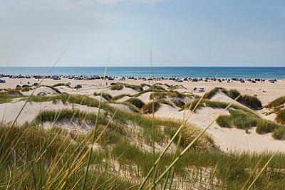 Denmark, Dunes - p1338m2150945 by Birgit Kaulfuss