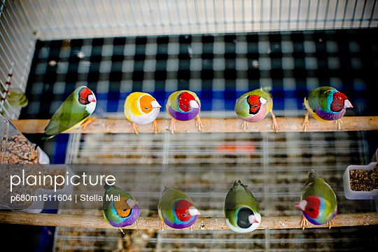 plainpicture | Photo library for authentic images - plainpicture p680m1511604 - Exotic birds - plainpicture/Stella Mai