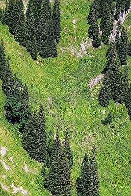 Tannenbäume an einer Hanglage im Ostallgäu - p177m1497547 von Kirsten Nijhof