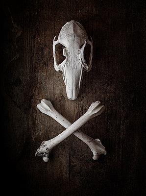 Hasenschädel und gekreuzte Knochen - p1280m2110877 von Dave Wall