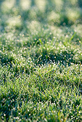 Morning dew - p2480782 by BY