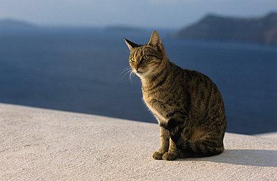 Streunende Katze - p3300400 von Harald Braun