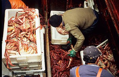 Meerefrüchte - p0030545 von Carolin