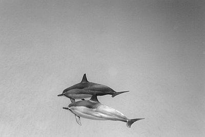 Dolphin - p3432723 by Sean Davey