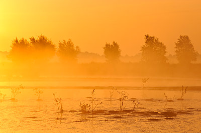 Sunrise over bog landscape, Goldenstedt, Lower Saxony, Germany - p884m1141205 by Willi Rolfes/ NiS