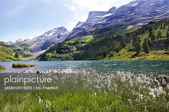 Bergsee mit blühendem Wollgras - p606m2015655 von Iris Friedrich