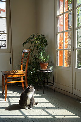 Cat taking the sun in an parisien house during covid-19 crisis. - p1610m2181453 by myriam tirler