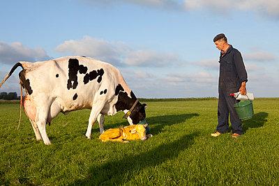 Junges Kalb mit Muttertier - p896m835523 von Anke Teunissen