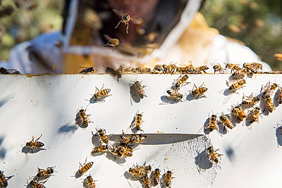 Close-up of beekeeper standing by beehive box - p1166m1547291 by Cavan Social