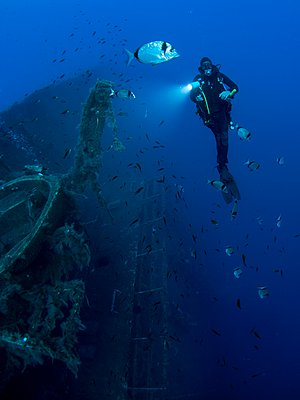 Full length front underwater view of diver investigating MS Zenobia shipwreck, Larnaca, Cyprus - p429m1103040f by PhotoStock-Israel