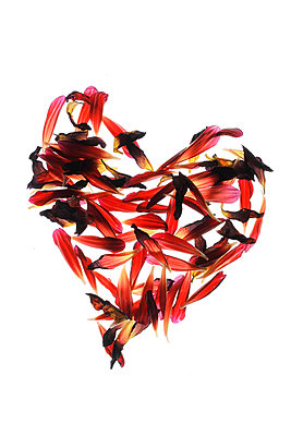 Heart shape - p450m1052007 by Hanka Steidle